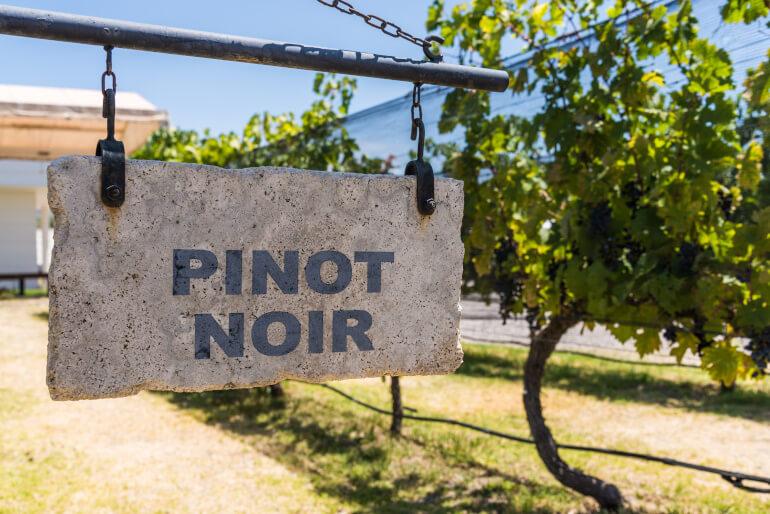 Pinot Noir Anbau